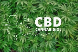Types of Cannabis Compounds Present In CBD Oil